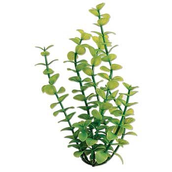 "New Hight Quality Water Wonders 18"" Green Bacopa Plant"