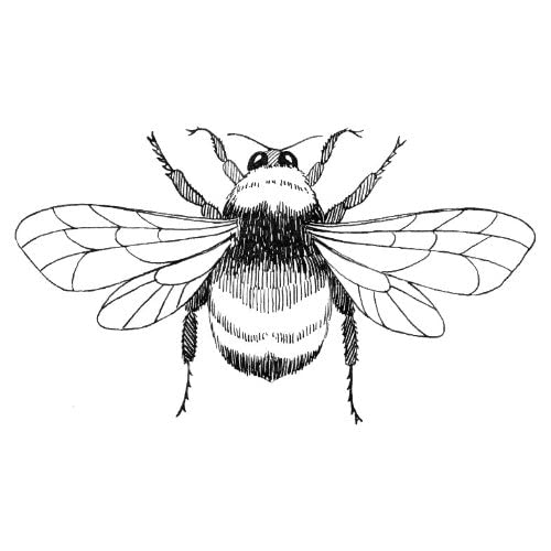 Line Drawing Bee : Amazon inch greeting card line drawing