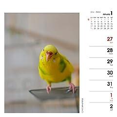 カレンダー2016 週めくりカレンダー いんこ日和 (ヤマケイカレンダー2016)
