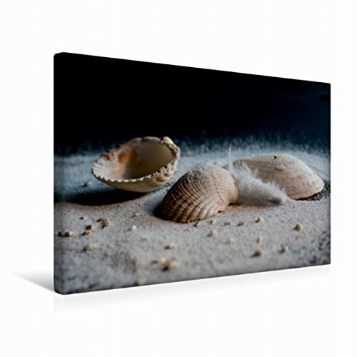 leinwand muscheln im sand 45x30cm special edition wandbild bild auf keilrahmen fertigbild auf. Black Bedroom Furniture Sets. Home Design Ideas