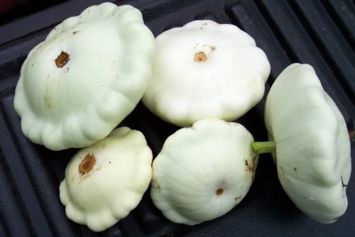 Cooking Patty Pan Squash Cooking Club Of America Reviews