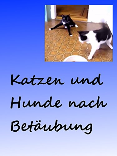 Clip: Katzen und Hunde nach Betäubung / Cats and dogs after anaesthesia