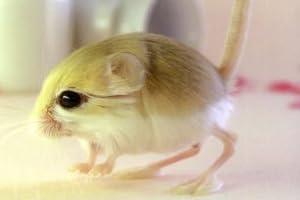 ザ・トビネズミ―最新の飼育(食餌・住まい・暮らし・医療)が全てわかる (ペット・ガイド・シリーズ)