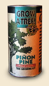 Pinion Pine Tree Growing Kit