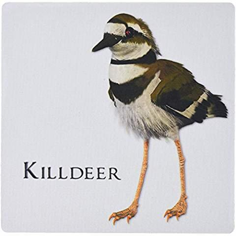Killdeer Shorebird - Mouse Pad, 8 by 8 inches 51583_1