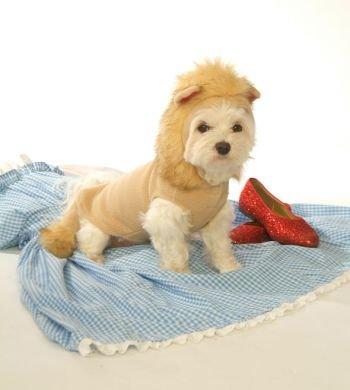 Dog C (Dog Wearing Dorothy Costume)