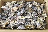 蒸しカキ用冷凍殻付牡蠣広島産(業務用冷凍殻付カキ) (3kg/35-40個)