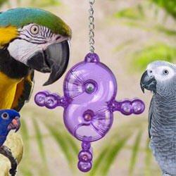 Cheap Nature's Instinct ForageWise Crazy 8's Large Bird Toy 9″ length x 1.5″ width x 6.25″ height (B004UMMH5K)