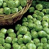 BRUSSEL SPROUTS - Evesham special 500 SEEDS [BRUSSELS]by Haddons