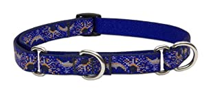 Lupine Starry Night Martingale Combo Collar for Small to Medium Sized Dogs, 10 to 14-Inch