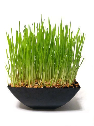 Rocket Cats Cat Grass Garden Kit Black