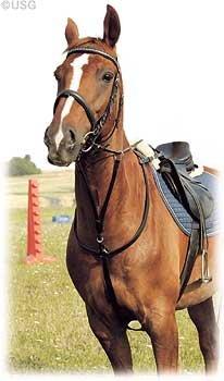 usg-flat-caccia-pettorale-con-martingale-forcella-accessori-saddlepart-con-snapples