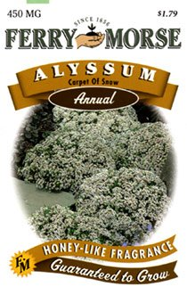 Ferry-Morse 1005 Alyssum Annual Flower Seeds, Carpet Of Snow (450 Milligram Packet)