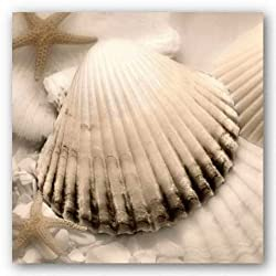 "Iridescent Seashell II by Donna Geissler 12""x12"" Art Print Poster"