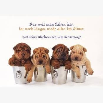 Witzige Geburtstagskarte Faltenhunde