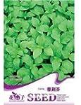 50 Seeds Catnip Herb Nepeta Cataria O...