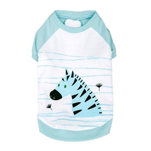 Blueberry Pet 12-Inch Polo Dress Shirt Henry The Zebra Cotton Dog Shirt, Medium, Aquamarine front-602954