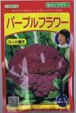 【種子】紫カリフラワー・パープルフラワー コート種子約40粒