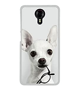 Dog with Glasses 2D Hard Polycarbonate Designer Back Case Cover for Micromax Canvas Xpress 2 E313