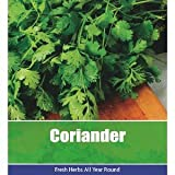 De Ree Coriander Coriandrun Sativum Herbs Herb Vegetable Plant 190 Seeds
