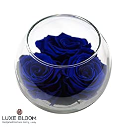 Luxe Bloom Deep Seas Preserved Roses | Lasts 60 days | 3 Deep Seas (deep blue) roses & greens in a 4"|256|256|?|e36c8761c31ed7db77bf2ebdac39dc34|False|UNLIKELY|0.40979063510894775