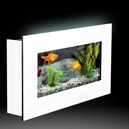 Unusual small fish tanks for Wall mounted fish tank