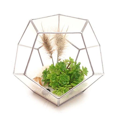 dodecahedron-large-geometric-glass-terrarium-handmade-glass-planter-modern-planter-for-indoor-garden
