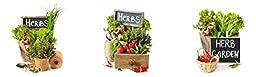 Platin Art Herb Garden Wall Decor Sticker