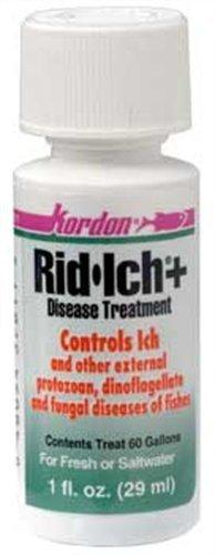 kordon-rid-ich-disease-treatment-1-fl-oz