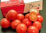わけあり・訳あり 静岡・長野産 アメーラトマト 1箱 2L?3Sサイズ 約900g  ※冷蔵
