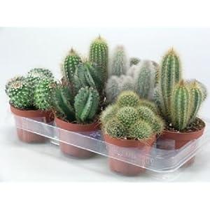 Succulents & Cactus Plants - Garden Plants & Flowers - Garden ...