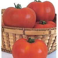 Beefsteak Tomato Celebrity D733A (Red) 25 Seeds by David's Garden Seeds