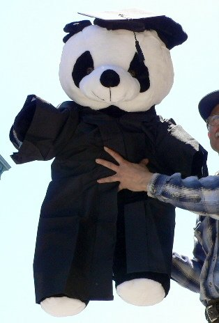 JUMBO 3-FEET-TALL GRADUATION PANDA BEAR &#8211; WEARING REAL GRADUATION CAP AND GOWN &#8211; GIANT LARGE BIG PLUSH STUFFED ANIMAL TOY &#8211; CAP AND GOWN IMPORTED AND PANDA IS AMERICAN MADE IN THE USA AMERICA