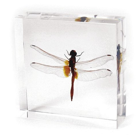 """Dragonfly Paperweight(3x3x1"""")"""