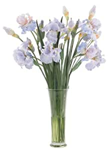 FAB Flowers French Blue Bearded Iris in a Tall Drink of Water, 28 Inches Length x 33 Inches High