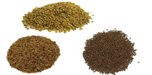 Food To Live Antioxidant Mix Of Sprouting Seeds (3 Lbs) - Broccoli Alfalfa Clover