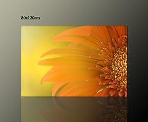 blumenbild gelb orange sommerbild leinwandbild sommer. Black Bedroom Furniture Sets. Home Design Ideas