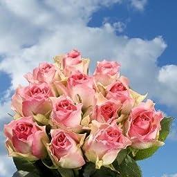 Cheap Creamy Pink Roses   200 Malibu Roses