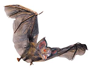 Share facebook twitter pinterest currently unavailable we for Animated flying bat decoration