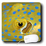 VWPics Underwater Reefs - Eye and spiracle of blue-spotted ray, Taeniura lymma occurs in Indo-Asian Pacific - MousePad (mp_46358_1)