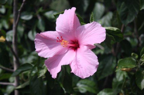 Flowers Interlude ebook