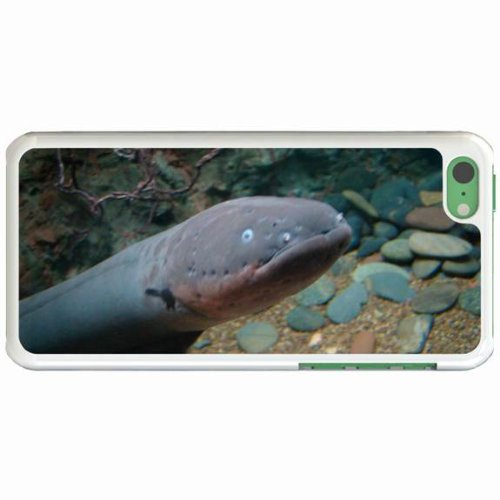 Custom Fashion Design Apple Iphone 5C Back Cover Case Personalized Customized Diy Gifts In Electric Eel White