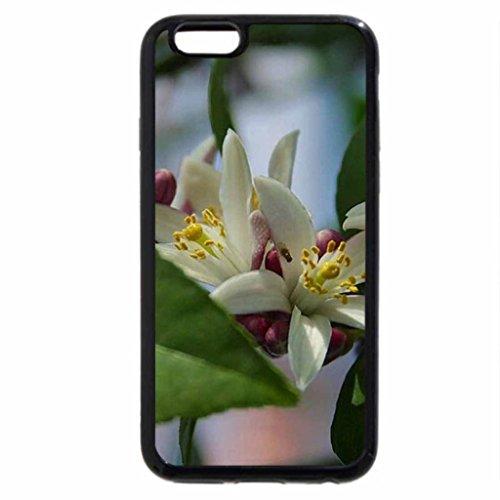iPhone 6S Plus Case, iPhone 6 Plus Case, MYER LEMON BLOSSOM
