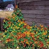 Fiore - Kings Seeds - Confezione Multicolore - Nasturzio - mix singolo alto