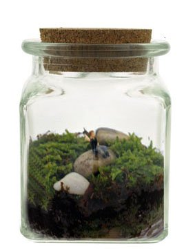 Twig Terrariums Le Petit Singularite DIY Terrarium 