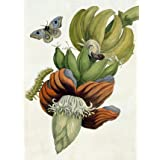 Banana Flower, by M S Meriam (V&A Custom Print)