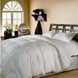 41gIMV5cMrL. SL160  Egyptian Cotton Queen Goose Down Comforter Bed