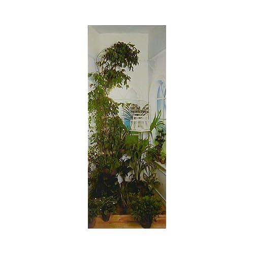 Indoor garden 5066 wall mural for Amazon wall mural