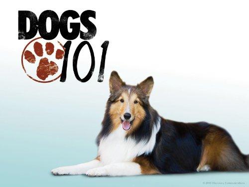 Amazon.com Dogs 101 Season 4