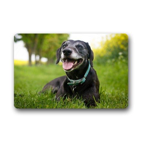 Custom Indoor Dog Gates front-137977